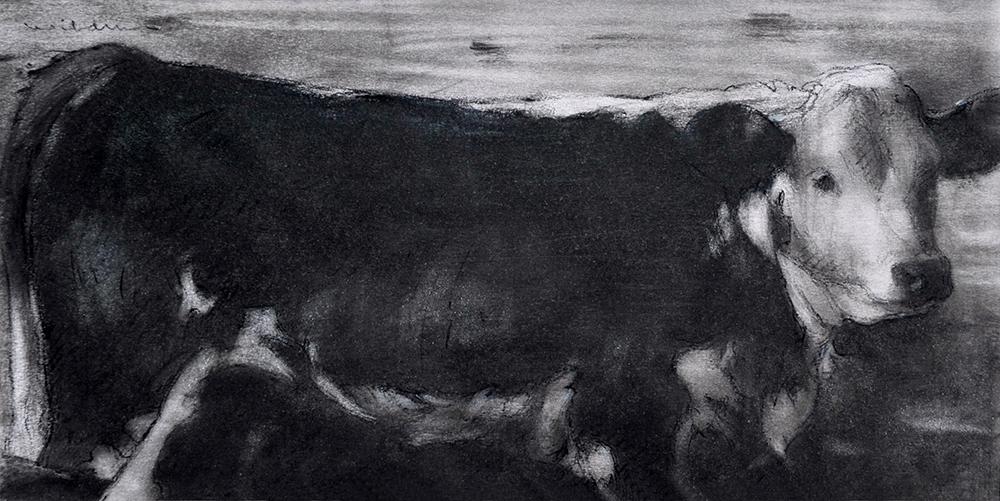 Hereford by Sally Wildman